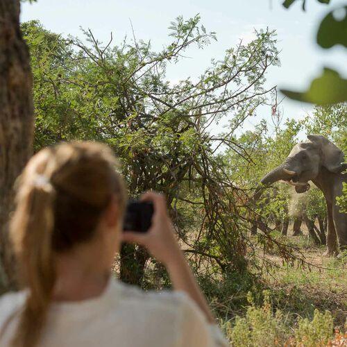 Individuelle Verlängerung: Safari-Lodge Africa on Foot