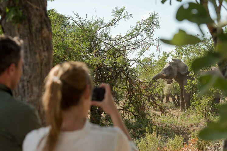 Verlängern Sie Ihre Südafrika-Urlaub mit einer aktiven Safari. Für 4-5 Tage erwarten Sie auf dieser Reise geführte Wanderungen im Big-Five-Wildreservat Klaserie. (© Africa On Foot)