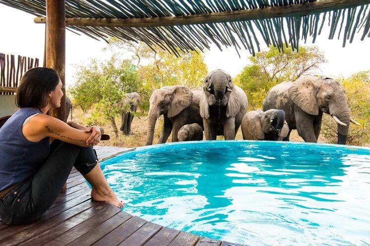 Für Erfrischung bietet sich ein Bad im Pool an (mit Ihren neuen Freunden). (© Africa On Foot)