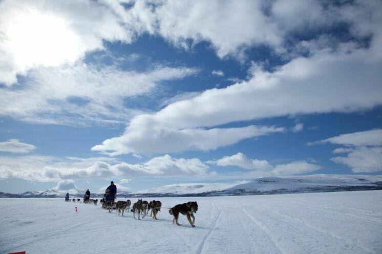 Über Seen, immer entlang der Fjälls, lenken Sie Ihren eigenen Hundeschlitten