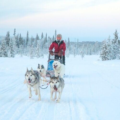 Hundeschlitten-Abenteuer in Finnisch-Lappland