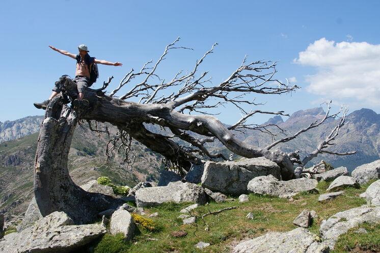 Bizarren vom Wind geformten Bäume begegnet man auch beim Aufstieg zum Nino-See.