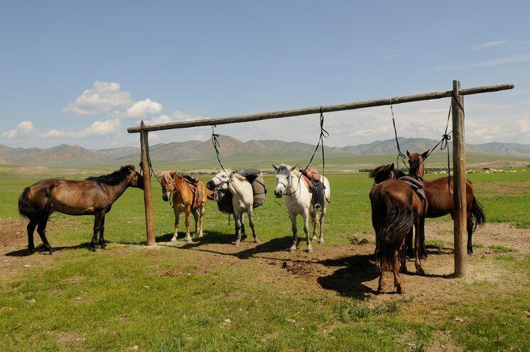 Wer sich als Reiter in dieser Landschaft bewegt, erlebt die Mongolei auf besonders authentische Art