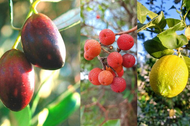 Auf dem Anwesen gibt es zu jeder Jahreszeit immer etwas zum Ernten und genießen.