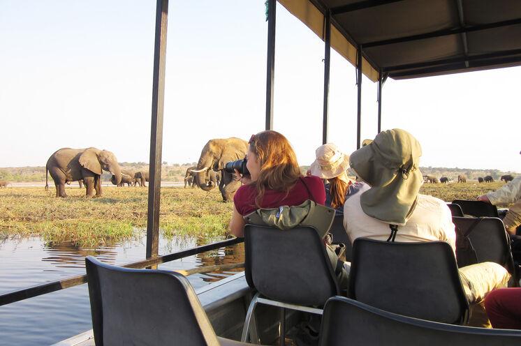 Am Chobe-Fluss kommen Sie bei einer Bootssafari großen Elefantenherden nahe.