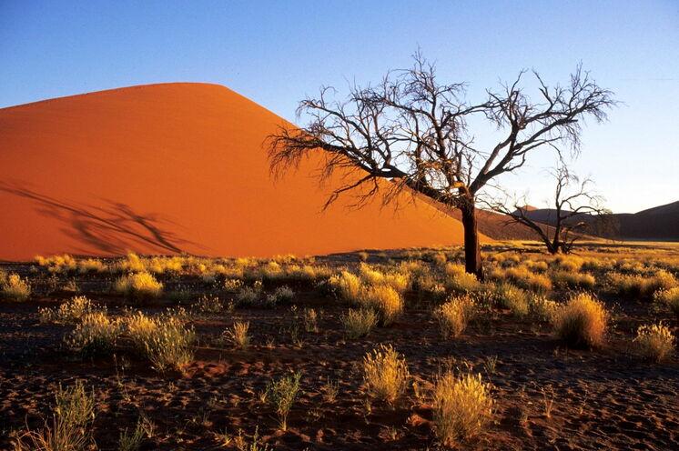 Natürlich darf ein Besuch der berühmten Dünen von Sossusvlei nicht fehlen - insbesondere in den Morgenstunden ist Farbspiel eindrucksvoll.