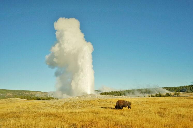 Der Yellowstone-Nationalpark - eines der größten Naturwunder unserer Zeit und unbedingt sehenswert!