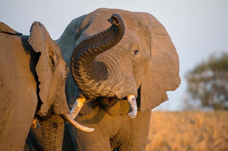 ...Elefanten...