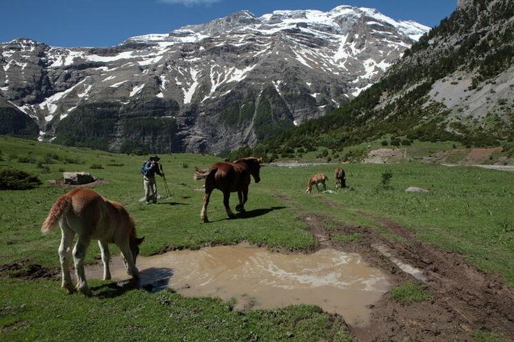 Offene Viehweiden und Pferdekoppeln im Herzen der Pyrenäen.