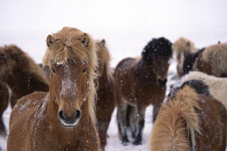 Pferde sind schöne Fotomotive und leben zahlreich in der Nähe des Gästehauses.
