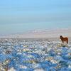 Nordlicht, Eis und Winterstille