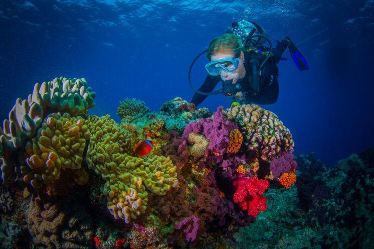 Erkunden Sie die farbenfrohe Unterwasserwelt...