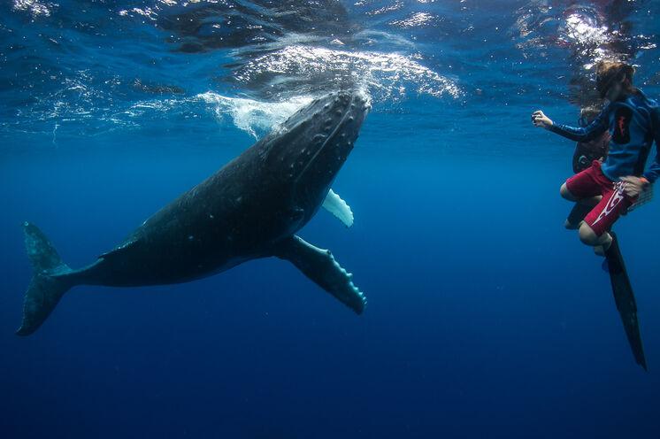 Als absolutes Highlight können Sie von Juli bis Oktober mit Buckelwalen schwimmen (optional)