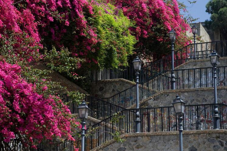 Blütenpracht im italienischen Frühling