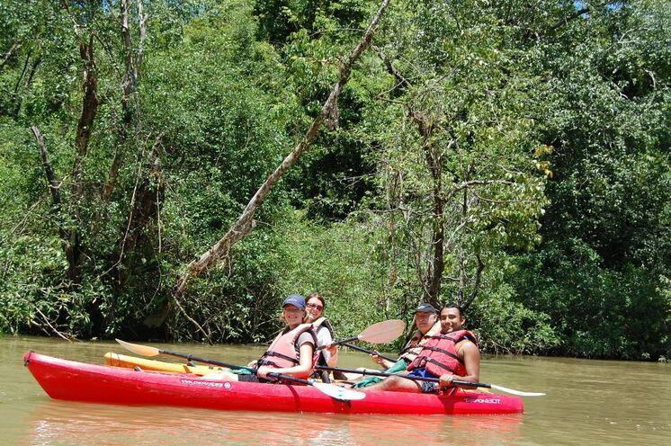 """Per Kajak """"erfahren"""" Sie das Ökosystem Mangrovenwald rund um den Golfo Dulce (9. Tag)!"""