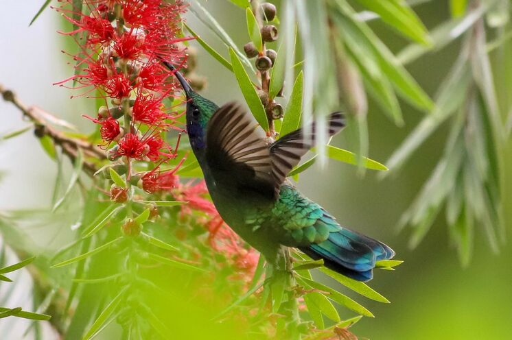 Beim Blick durch das Fernrohr lassen sich auch die kleinen flinken Vögel fotografisch festhalten