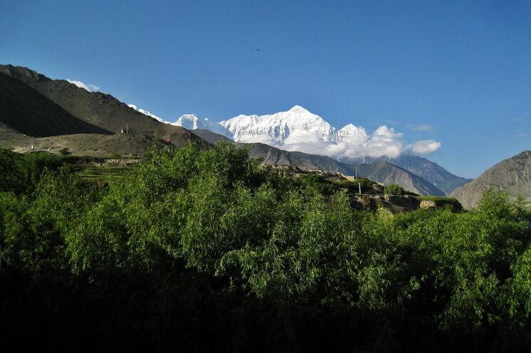 Auf fast 3000 m Höhe wächst noch Bambus - Blick zum Nilgiri