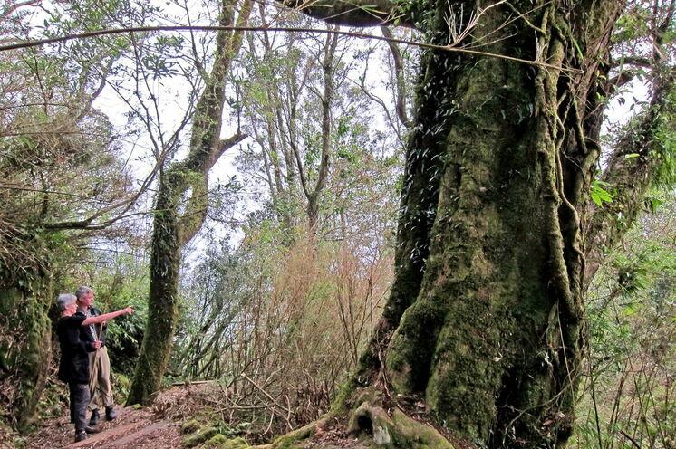 Wanderung durch Bambuswälder und ...