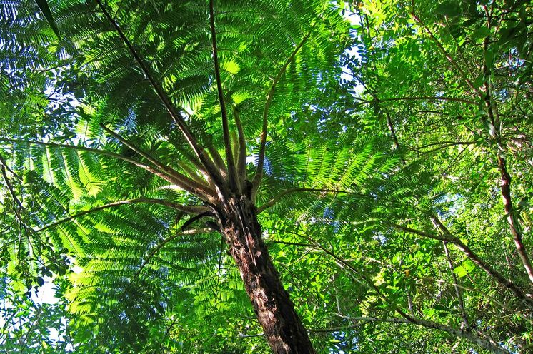 Tropische Flora im Nanrenshan-Nationalpark.