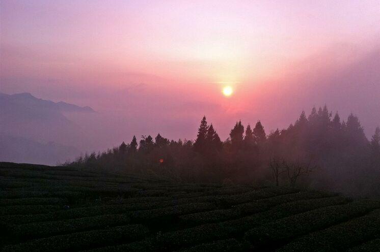 """Sonnenuntergang über dem vielgerühmten Wolkenmeer, das sich um den Yushan (""""Jadeberg"""") windet."""