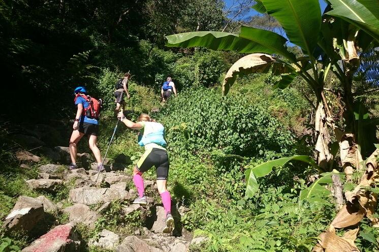 Zu beginnt läuft man durch die subtropische Zone. Bananenpalmen und Mangobäume zieren den Trail