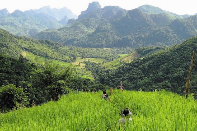Der unberührten laotischen Natur kommen Sie bei einer Dschungelübernachtung ganz nah