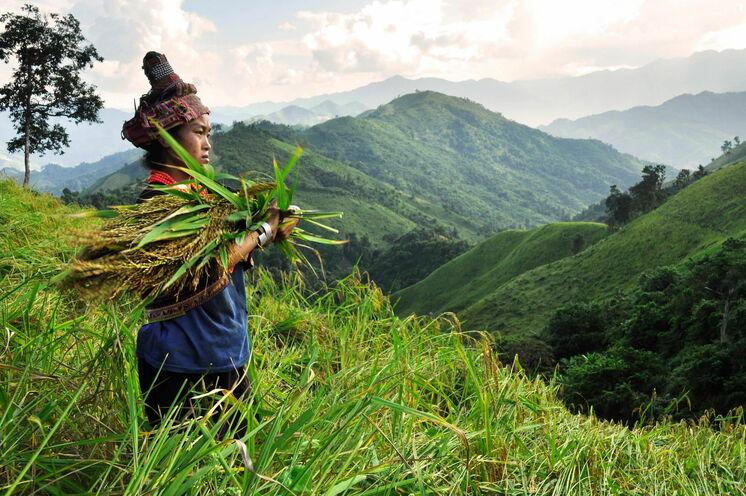 2 Tage Trekkingerlebnis im bergigen Nam Ha-Nationalreservat