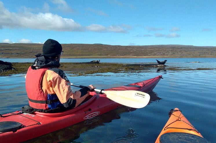 Seekajaktour in geschützten Fjorden mit tierischem Publikum