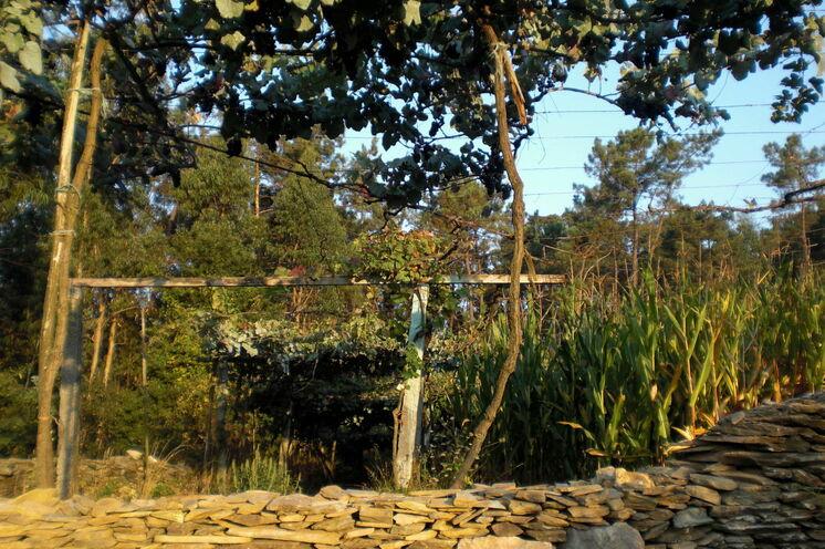 Kleine Gärten mit Mais und Weinreben