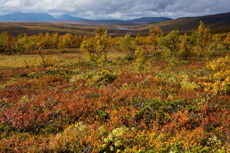 Goldener Herbst in Schweden © Johannes Kormann
