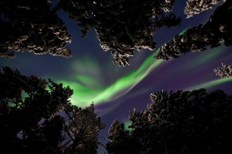 Spektakulär: tanzendes Nordlicht in der Polarnacht ...  © Johannes Kormann