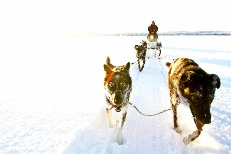 Per Hundeschlitten durch die sonnige, endlose Weite © Johannes Kormann