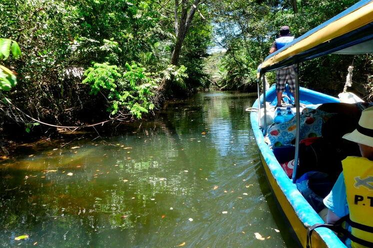 Das letzte Stück zur Karibik fahren Sie per Boot durch Mangroven