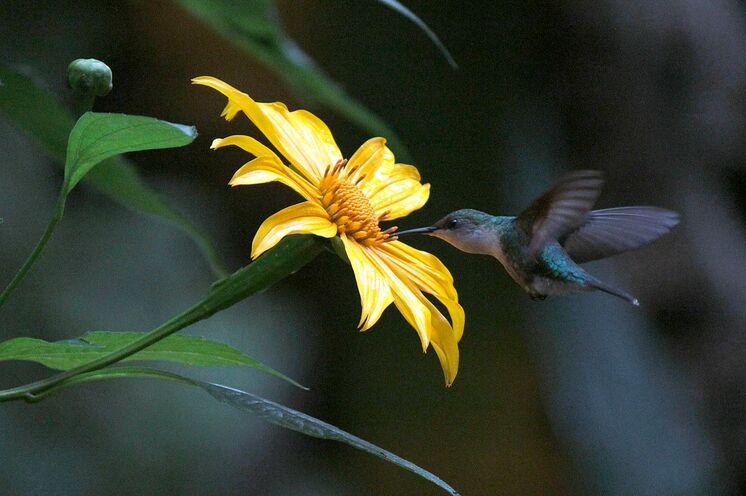 Artenvielfalt und Megadiversität überraschen hier die Wanderer