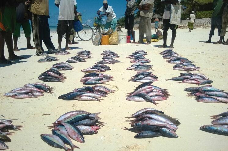 Beobachten Sie den Fischern beim Verkauf Ihres Fangs