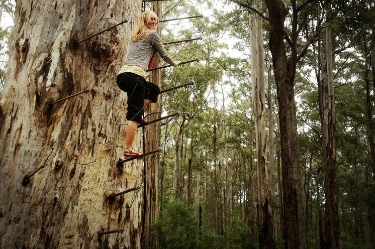 """Wagemutige können zudem einen der höchsten """"Feueraussichtsbäume"""" der Welt erklimmen"""