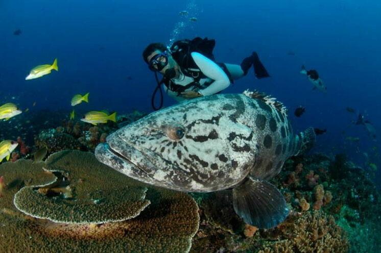 Auf dieser Safari-Reise haben Sie auch die Gelegenheit unter Wasser Tieren zu begegnen
