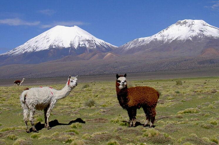 Der Park wird vom höchsten Berg Boliviens, dem Sajama, dominiert.
