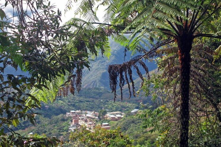 Heute geht es durch den fast schon tropischen Bergnebelwald (18. Tag).