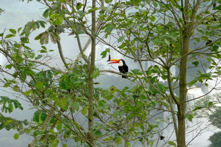 An den Iguazú-Fällen gibt es eine bunte Tier- und Pflanzenwelt.