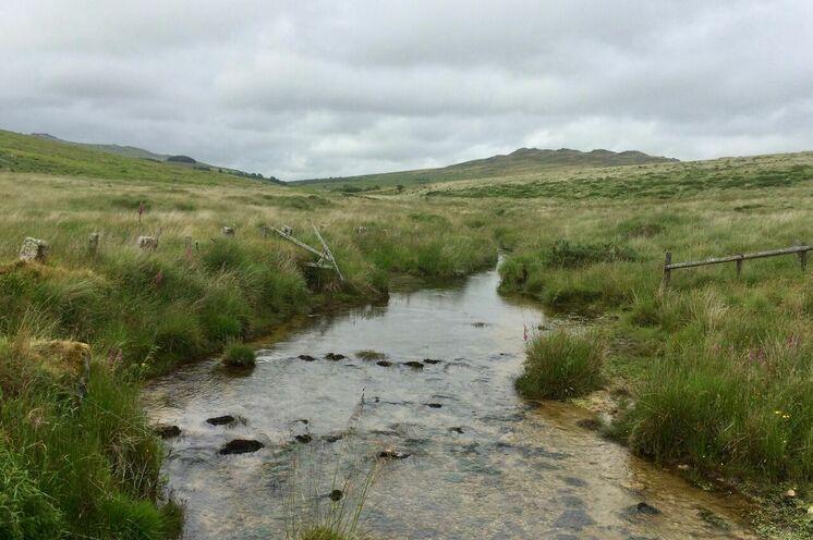 Erleben Sie die ursprüngliche Natur im Bodmin Moor