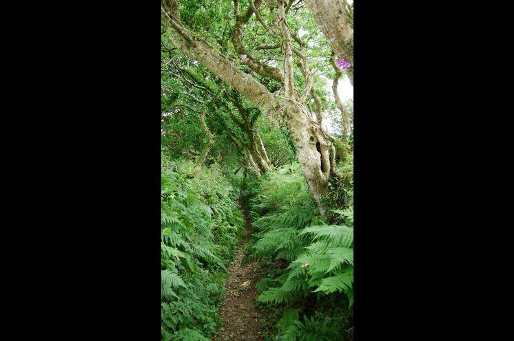 Durch urwüchsige Natur wandern Sie am 2. Tag der Reise zur höchstgelegenen Stadt Cornwalls, Minions