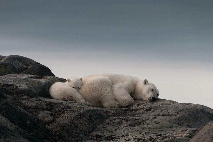 Mit etwas Glück kann man hier auf den umliegenden Sandinseln Eisbären sichten