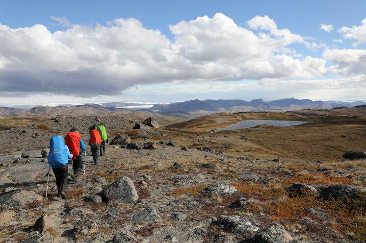 Die größte eisfreie Fläche Grönlands ist auch Heimat vieler Wildtiere.