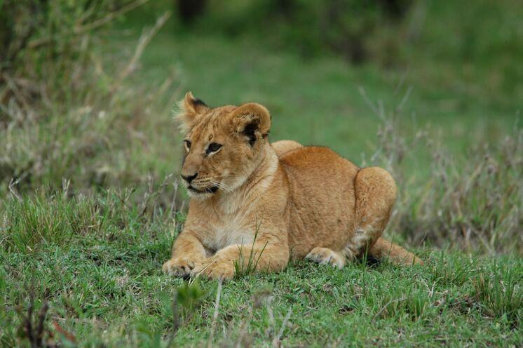 Im Fokus stehen Safaris - Schnappschüsse wie dieser nicht ausgeschlossen