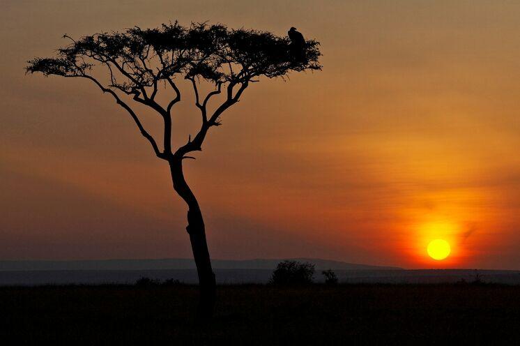 Typisch Afrika: Sonnenuntergang mit Akazie in der Serengeti