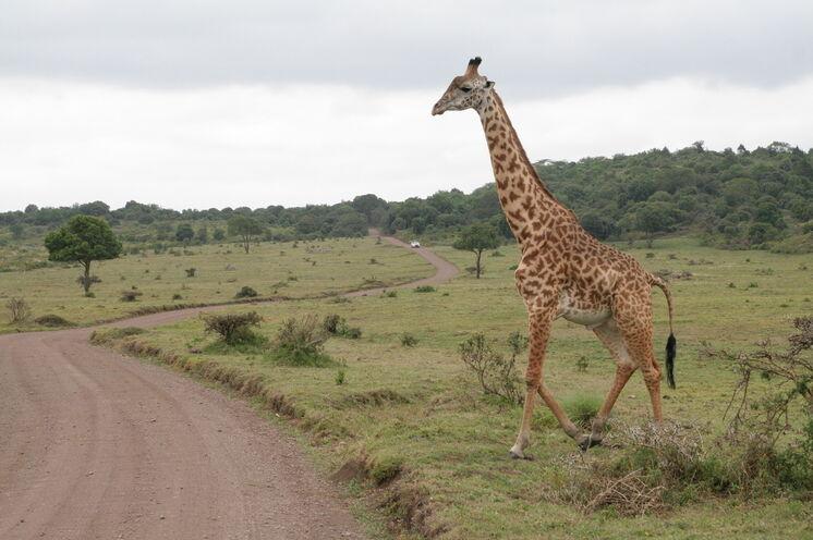 Atemberaubende Begegnungen mit den berühmten Wildtieren Afrikas sind garantiert