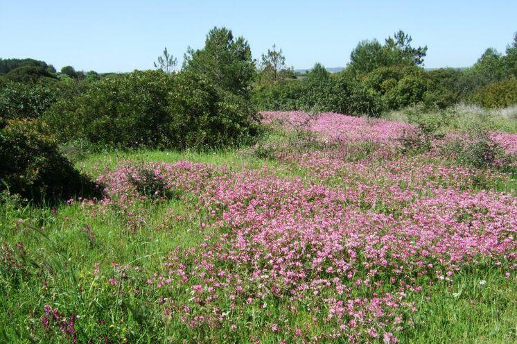 Im Frühjahr blüht die Landschaft und es ist herrlich grün!