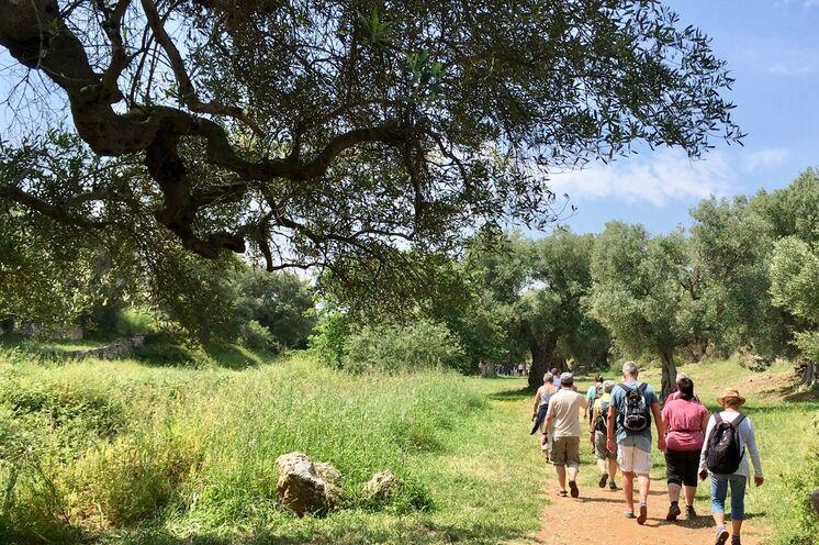 Auf ruhigen Pfaden wandern Sie genussvoll durch die Landschaft der Olivenhaine