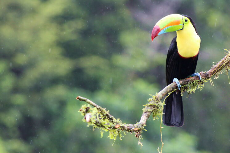 Während der gesamten Reise ergeben sich hervorragende Tierbeobachtungsmöglichkeiten
